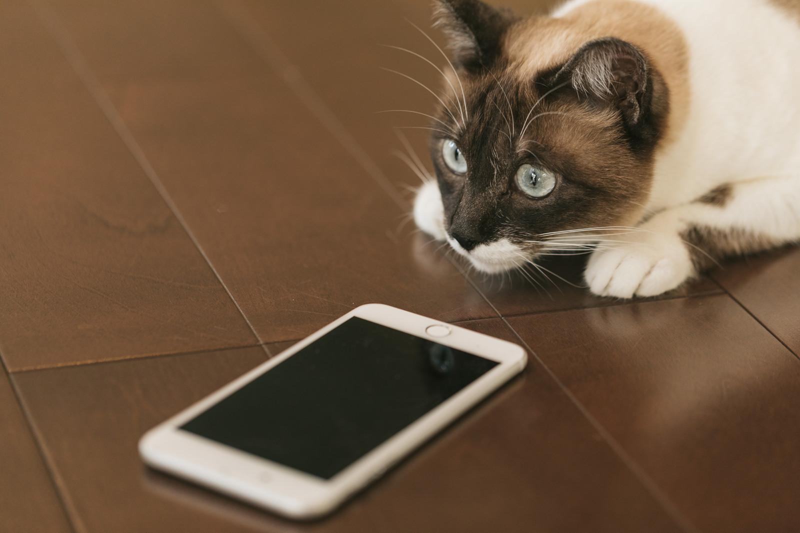 iphone充電もたない バッテリー交換